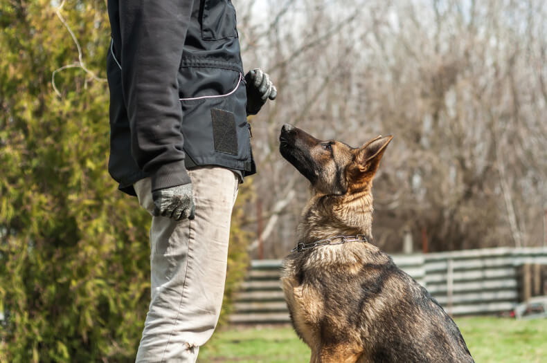 formation maître-chien