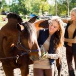 travailler avec les chevaux