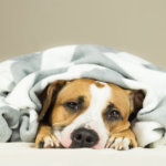 dépression chez le chiens