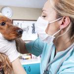 métier assistant vétérinaire