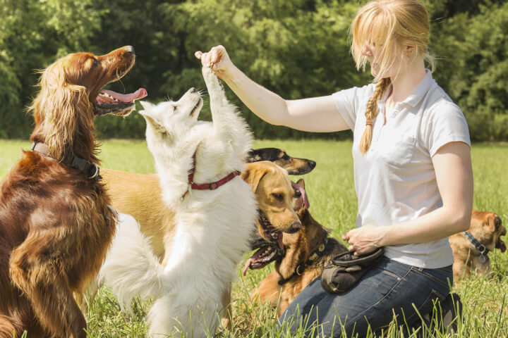 travailler avec les chiens