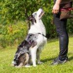 métier éducateur canin