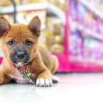 vente de chiens et chats interdites