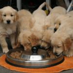 Créer son élevage canin